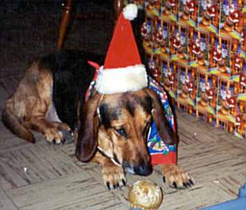 elly may basset hound with xmas hat