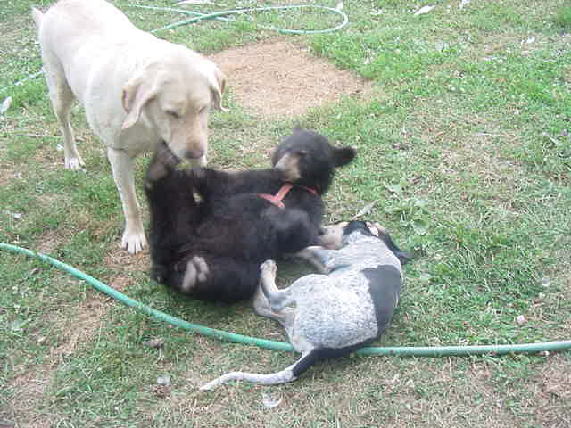 sybil the bear cub with, jed, fannie may